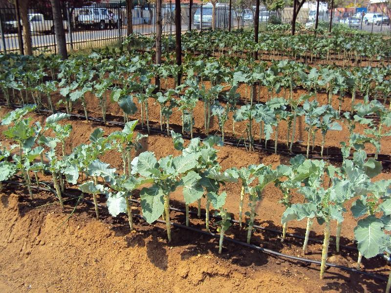 Somarelang_Tikologo_Eco_Garden