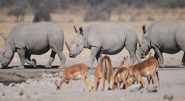 B3-Rhinos-at-the-Khama-Rhino-Sanctuary-www.thepressphoto