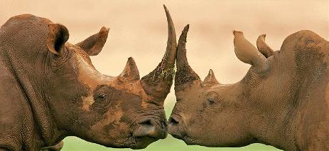 khama_rhino_sanctuary