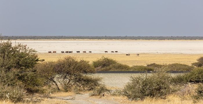 MAKGADIKGADI_0001_Photo_by_Diego-Delso_WIKIPEDIA