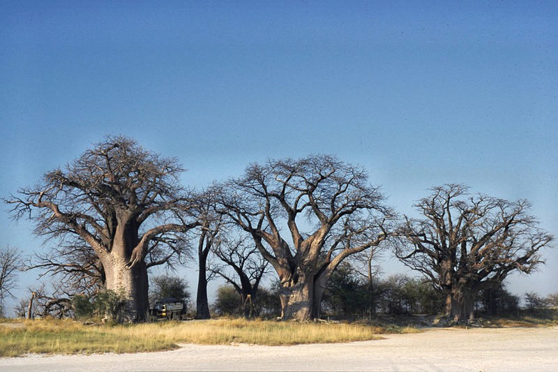 MAKGADIKGADI_0002_Photo_by_Ralf-Ellerich_WIKIPEDIA