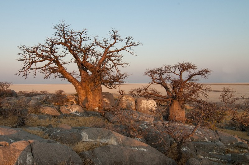 MAKGADIKGADI_0004_Photo_by_hbieser_NEEDPIX