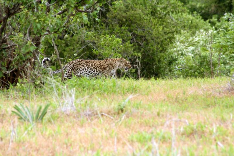 RUAHA_004_PHOTO_BY_Thomson-Safaris_FLICKR