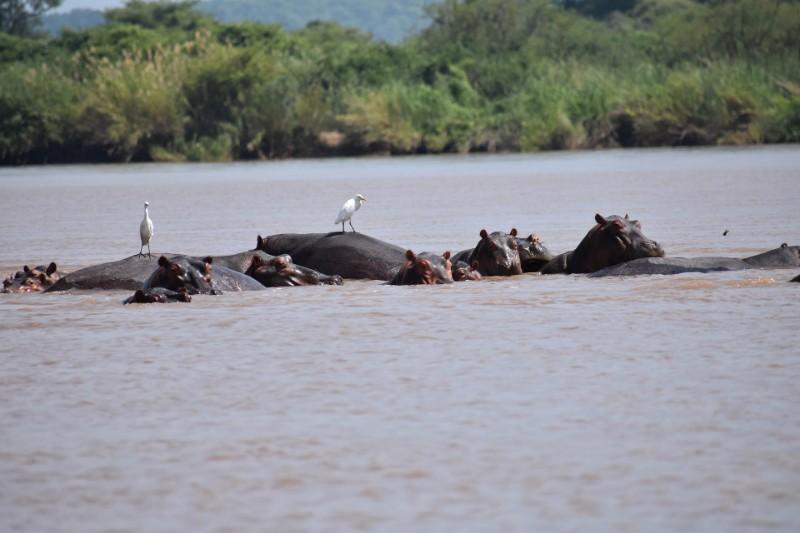 ZAMBEZI_001_PHOTO_BY_nyatihunter1_PIXABAY