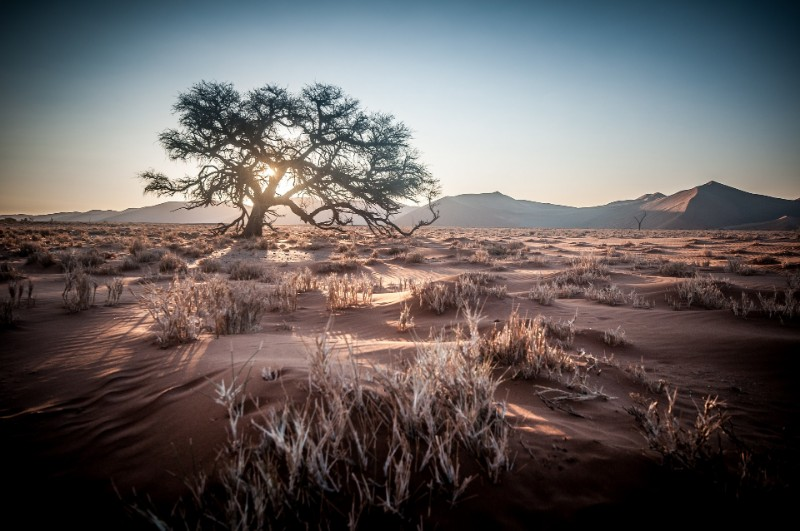 NAMIB_001_PHOTO_BY_-Jo-Wiggijo_PIXABAY