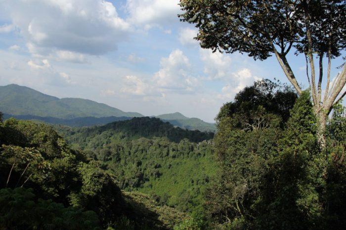NYUNGWE_001_PHOTO_BY_Rwanda-Government_FLICKR