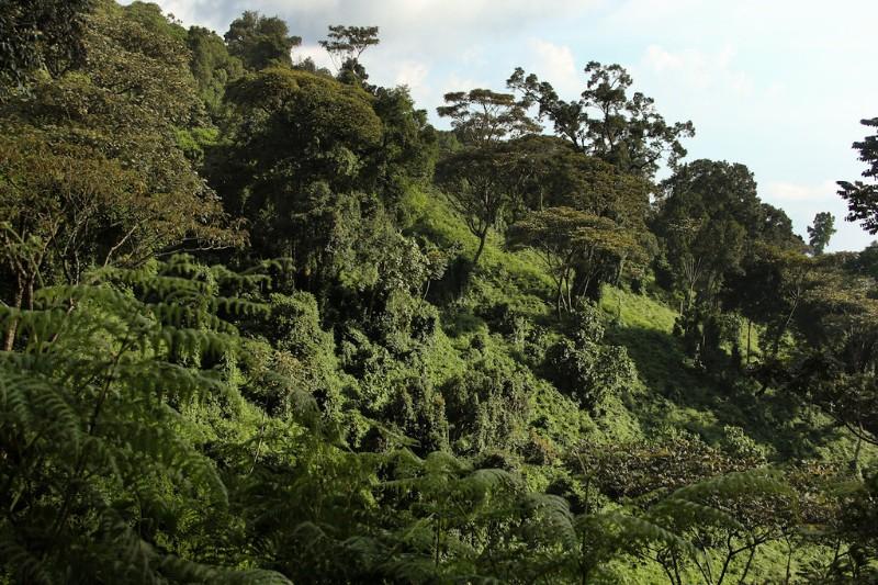 NYUNGWE_002_PHOTO_BY_Rwanda-Government_FLICKR