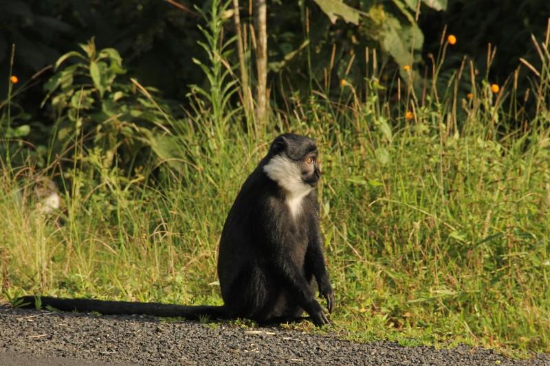 NYUNGWE_003_PHOTO_BY_Rwanda-Government_FLICKR