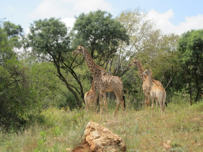 GROENKLOOF_001_PHOTO_BY_amanderson2_FLICKR